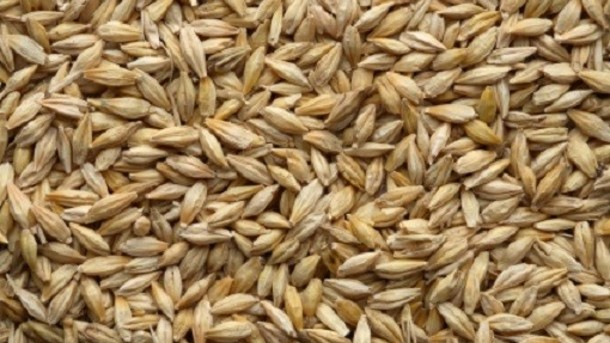 CHARACTERIZATION OF BARLEY SUCROSE PHOSPHATE SYNTHASE
