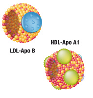 ROLE OF SOLUBLE LR11 AND APOLIPOPROTEINS A1&B IN THE PROGRESSION OF DIABETIC RETINOPATHY