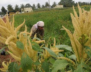 AGRICULTURAL PRODUCTIVITY IN KARNATAKA- A CASE STUDY OF SELECTED CROPS