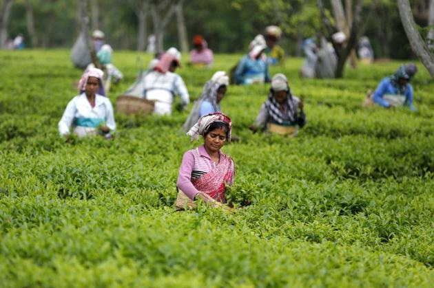 INFRASTRUCTURAL CHARACTERISTICS OF  SELECTED TEA ESTATES IN THE WESTERN  PARTS OF DOOARS IN JALPAIGURI DISTRICTS  OF WEST BENGAL