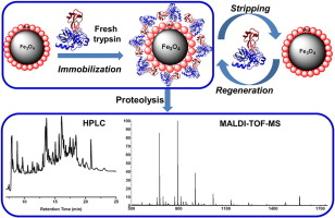 Immobilization of α-amylase on Magnetic Fe3O4-Nanoparticle