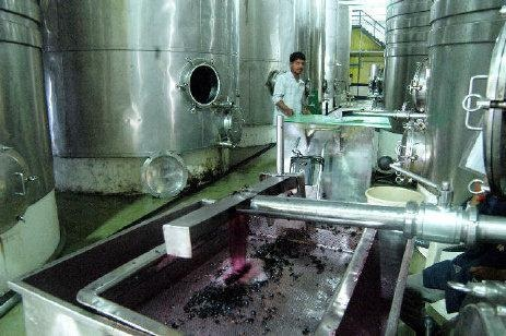 WINE PROCESSING IN SANGLI DISTICT OF MAHARASHTRA