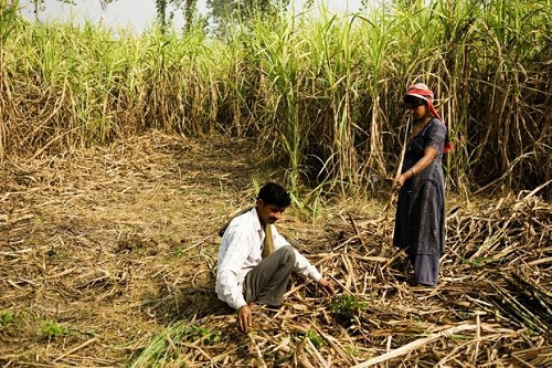 """USING GIS TECHNIQUES SUGARCANE CROPPING PATTERN CASE STUDY OF  SHIRUR TAHSIL, PUNE DISTRICT, MAHARASHTRA STATE"""