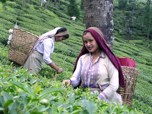 DIMENSION OF CHANGES IN THE SOCIO-ECONOMIC  LIFE OF THE TEA GARDEN LABOURERS IN DARJILING  HIMALAYA: A GEOGRAPHICAL ASSESSMENT