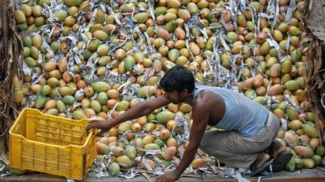 THE STUDY OF FIELD EXPERIENCES OF EXPORT OF MANGO