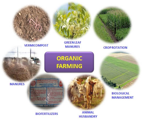 HEALTH PROSPECTS OF ORGANIC FARMING – A STUDY  WITH SPECIAL REFFERENCE TO CUDDALORE DISTRICT