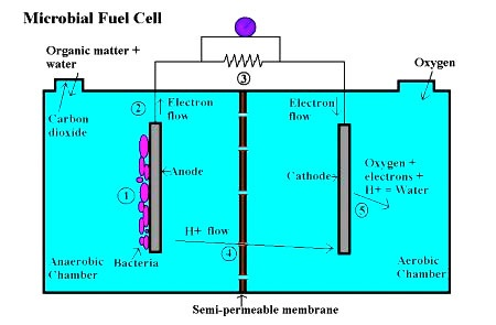 DOES AND DONT DOES MICROBIAL FUEL CELL