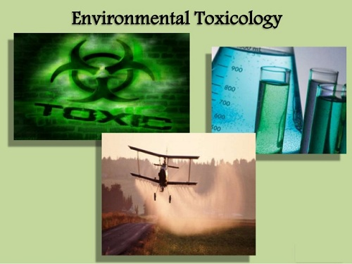ENVIRONMENTAL TOXICOLOGY AND  ANALYSIS OF IMPACT OF PESTICIDES ON  LENS CULINARIS