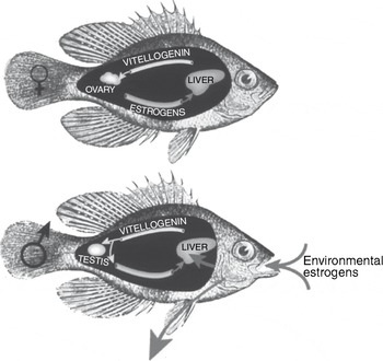 STUDIES ON CHANGES OF SODIUM, POTASSIUM AND CALCIUM IN GONAD OF TWO SPECIES OF FISHES OFF JODIA COAST IN GULF OF KUTCH